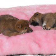 slumber pet cloud cushions dog bed pink with dogs